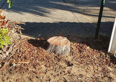 Before Stump Grinding