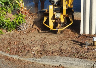 During Stump Grinding